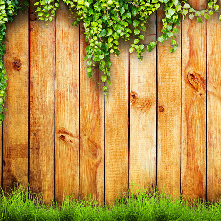 green land: Fresh spring green grass and leaf plant over wood fence background