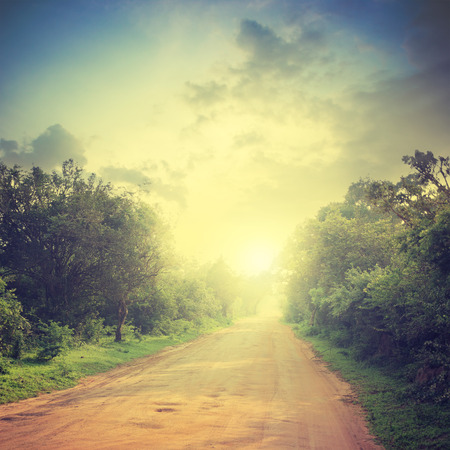 ground road and bush with savanna landscape background Stock Photo