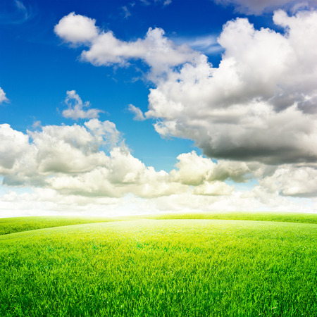 sky with clouds: Green field under blue clouds sky. Beauty nature background