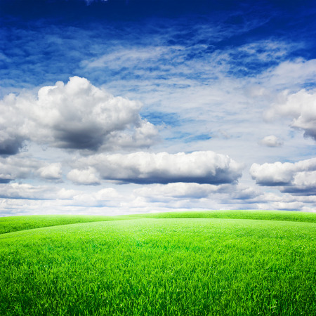 agriculture wallpaper: Green field under blue clouds sky. Beauty nature background
