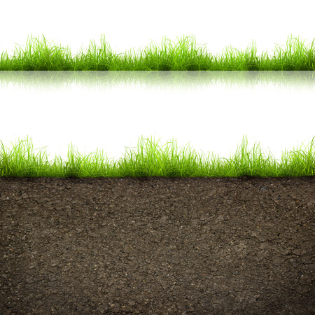 green grass with in soil isolated on white background