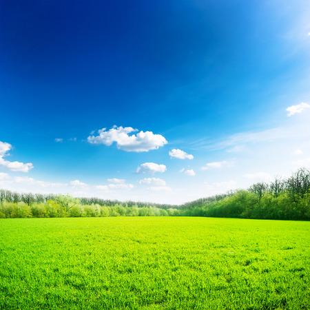 Campo verde bajo el cielo azul. La naturaleza de fondo Belleza Foto de archivo - 35414849