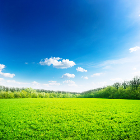 blue sky and fields: Green field under blue sky. Beauty nature background Stock Photo