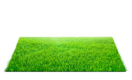 grass beautiful: Square of green grass field over white background