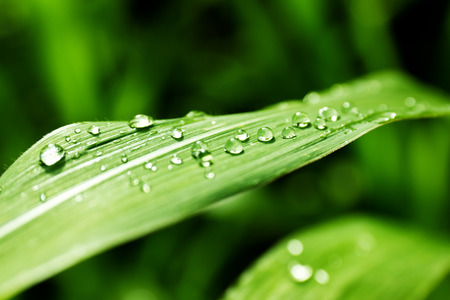 dews: Close-up of a leaf and water drops on it background
