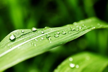 Close-up z liści i krople wody na jej tle