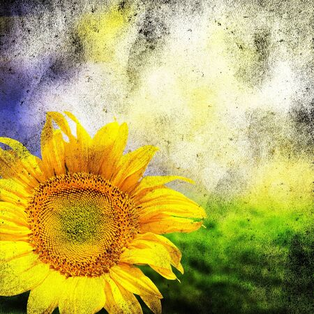 sun burnt: Abstract grunge background with sunflowers over field and sunlight Stock Photo