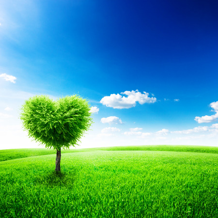 Green field with heart shape tree under blue sky. Beauty nature. Valentine concept background