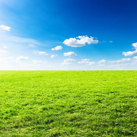 Campo verde sotto le nuvole del cielo blu. Bellezza della natura sfondo