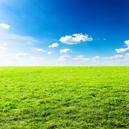 grass country: Green field under blue clouds sky. Beauty nature background