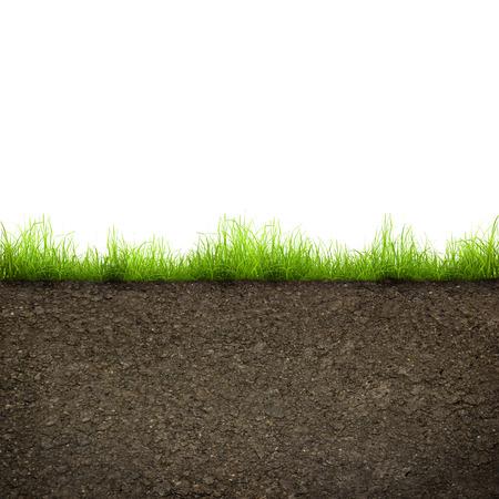 terreno: erba verde con in terreno isolato su sfondo bianco Archivio Fotografico