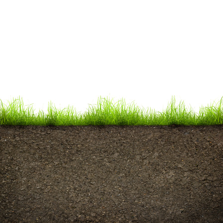 grounds: green grass with in soil isolated on white background