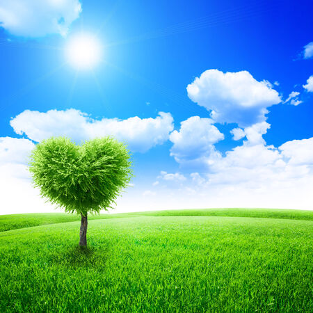 beauty in nature: Green field with heart shape tree under blue sky. Beauty nature. Valentine concept background