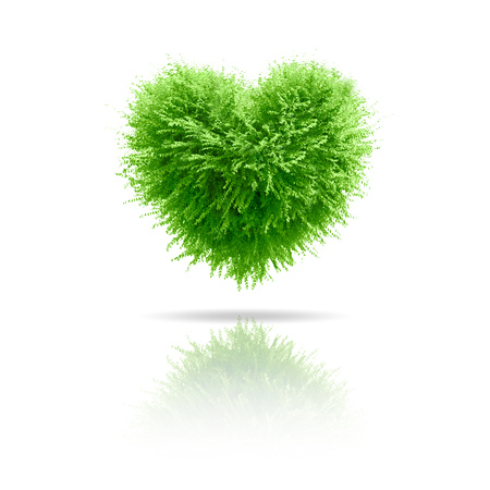 falling in love: Valentine tree, love concept, heart shape leaves over white background