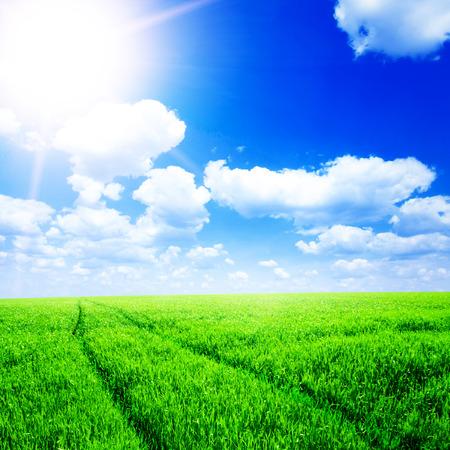 nice weather: Green field under blue sky Stock Photo