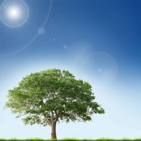 oak trees: Single tree with green grass over blue sky background