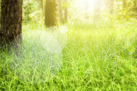 nice day: Green grass in the forest. Beauty nature background