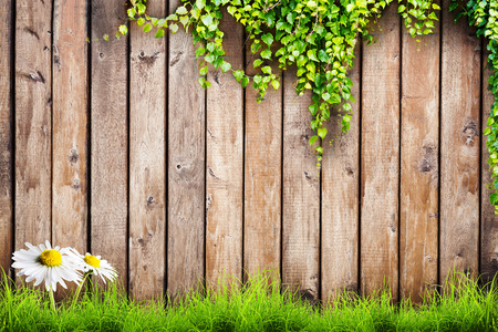 Fresh spring green grass with white flower camomile and leaf plant over wood fence background photo