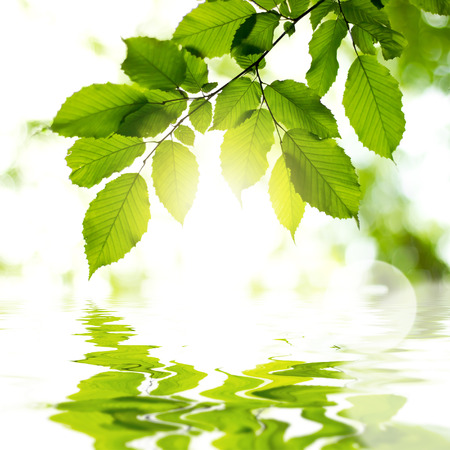 Leaves in the forest with reflection in water and sun light. Background Standard-Bild