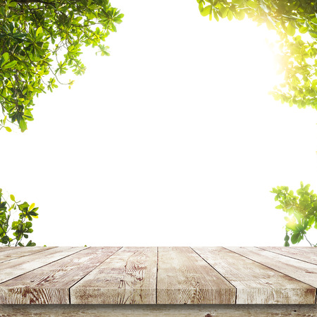 Fresh spring green leaves with wood table over white. Natural background Banque d'images
