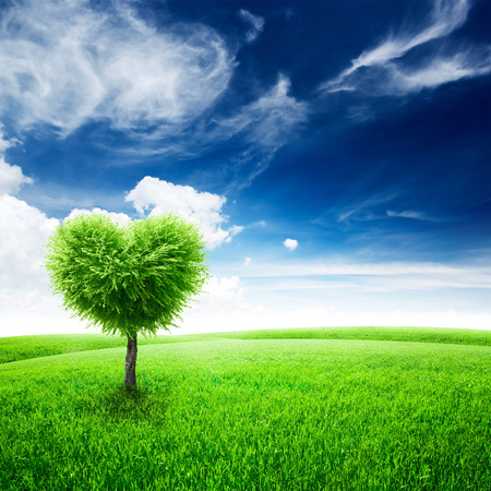 horizon over land: Green field with heart shape tree under blue sky. Beauty nature. Valentine concept background