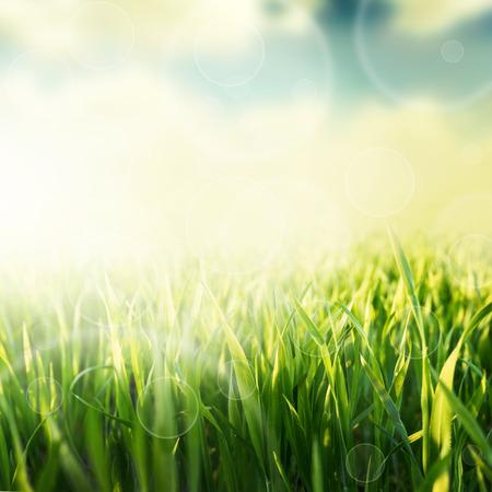 luz solar: Fundo da grama verde natural com foco seletivo