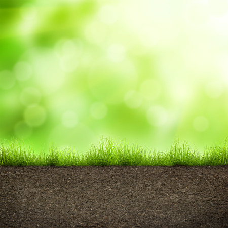 green grass with in soil over soft bokeh. Environment background