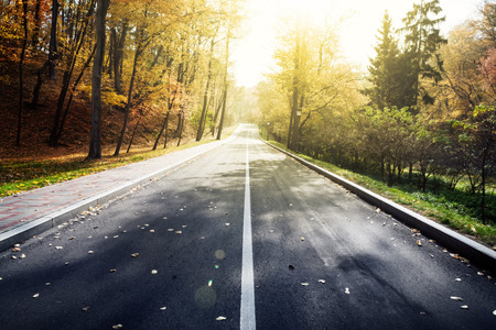 twisty: Road in autumn forest. Beauty nature background