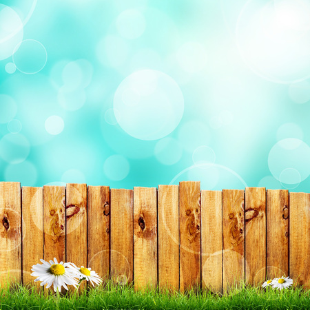 knothole: Wooden fence and green grass with white camomile flower against bkue bokeh sky background