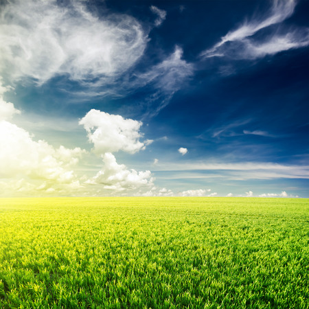 green: Green field under blue clouds sky. Beauty nature background