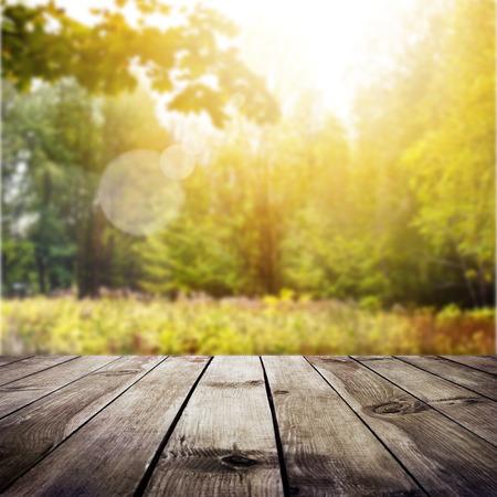 Prachtige zonlicht in de herfst bos. Schoonheid aard achtergrond