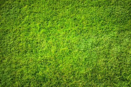 natural background: Green grass natural background. Top view Stock Photo