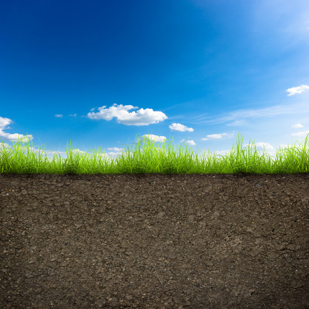 blades of grass: green grass with in soil over blue sky. Environment background