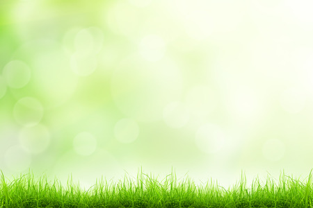 defocused: Green grass natural background with selective focus Stock Photo