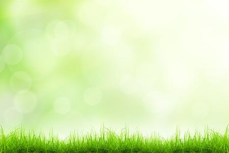 luz natural: Natural de fondo de la hierba verde con enfoque selectivo