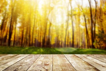 hojas de arbol: Hermosa la luz del sol en el bosque de oto�o. La naturaleza de fondo Belleza