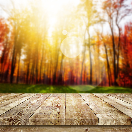 nature beauty: Beautiful sunlight in the autumn forest. Beauty nature background
