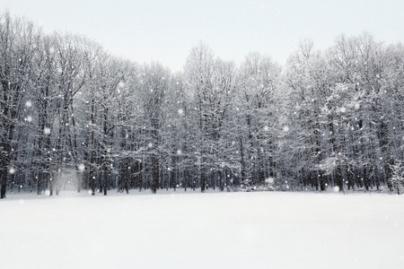 snow covered forest: Winter snow covered forest. Beauty nature background Stock Photo