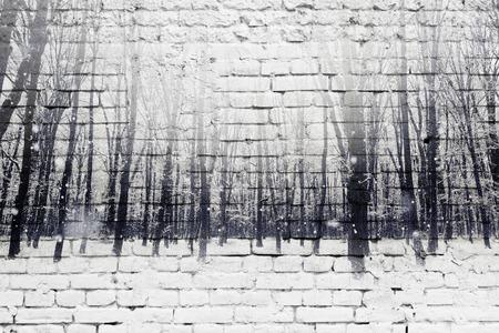 겨울 눈이 덮여 포리스트 및 흰색 벽돌 벽의 이중 노출. 아름다움 자연 배경입니다.