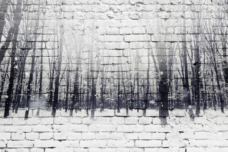 cold background: Double exposure of winter snow covered forest and white brick wall. Beauty nature background.