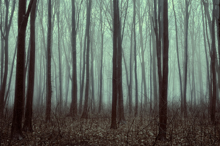 tree trunk: Beautiful forest with fog. Beauty nature background