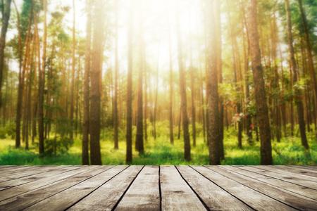 arbol de la vida: Bosque de pinos. La naturaleza de fondo Belleza