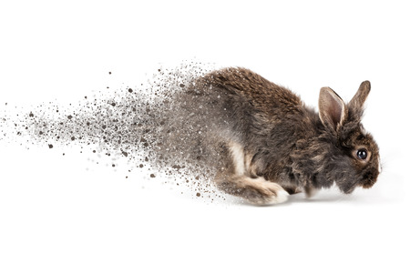 disintegration: Grey running rabbit isolated on a white background Stock Photo