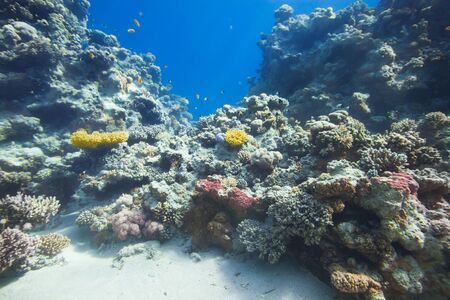 reef fish: Under water coral reef and tropical fish background Stock Photo