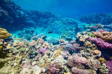 fish water: Under water coral reef and tropical fish background Stock Photo