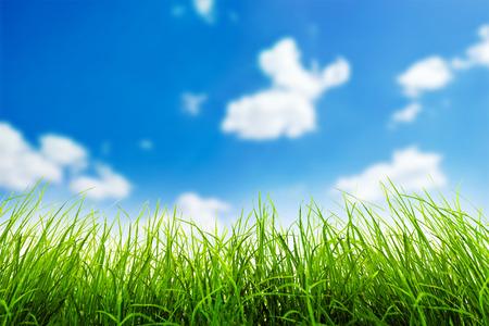 himmel hintergrund: Grünes Gras über einen blauen Himmel Hintergrund Lizenzfreie Bilder