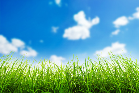 sky and grass: Green grass over a blue sky background