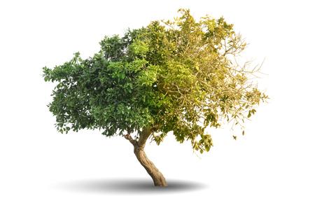 Árbol aislado sobre fondo blanco