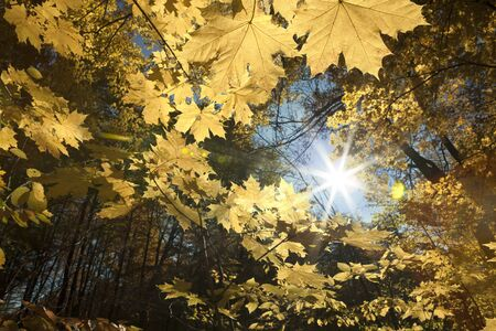 nature of sunlight: Sunlight in the autumn forest. Beauty nature background