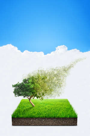 disintegrate: Square of green grass field with alone tree over blue sky background